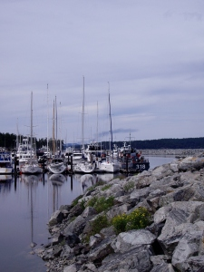 One small part of the marina in Sidney.