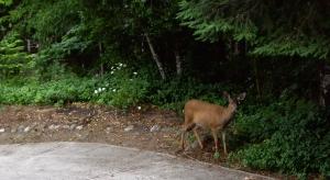Ambling along the driveway