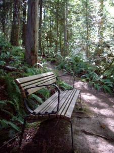 A place in the forest to rest and reflect.