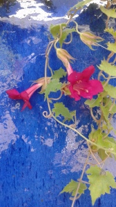 2015-08-22 flowersonbluewall